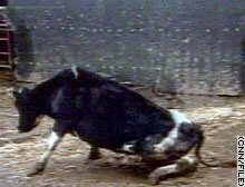 Mad cow disease first appeared in the United Kingdom in the mid-1980s.