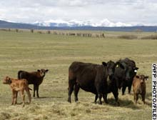 Canadian cattle have also been infected with the disease.