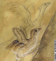 Flapping may have helped some ancestors of avians get away, researcher says.