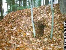 Maine Primitive Skills School said the walls of the shelter should be about 2-feet thick -- good enough to withstand a mild night.
