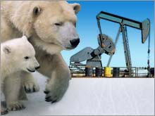 arctic_oil_polar_bear.03.jpg