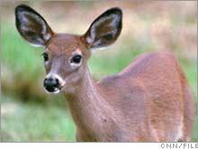 deer.01.jpg
