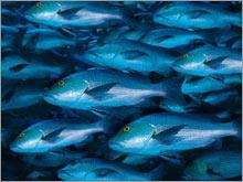 6_overfishing_story.jpg