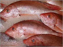 seafood_fish.03.jpg