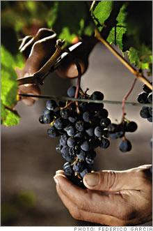 grapes2.03.jpg