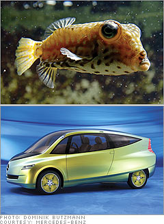 Product Design Nature S Way The Fish That Flies 2