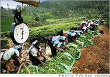 tea_pickers.03.jpg